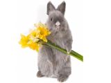 خرگوش خاکستری ناز و ملوس