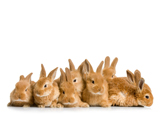عکس دسته جمعی خرگوش ها