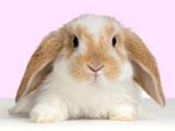 بچه خرگوش بامزه