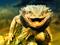 مارمولک اژدها