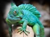 عکس با کیفیت آفتاب پرست سبز