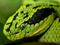 عکس بزرگ سر ماهی سبز