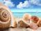 عکس صدف و حلزون دریایی