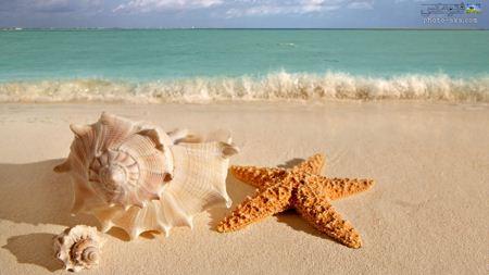 ستاره دریایی و صدف در ساحل Seashell and starfish