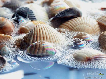 صدف های رنگی در کنار ساحل colorrfull Seashell in beach
