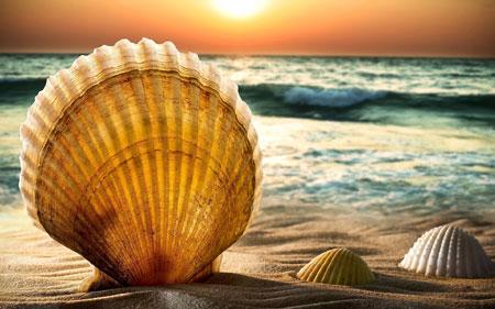 عکس پس زمینه صدف ساحل seashells beautiful in beach