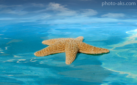 ستاره دریایی setareh daryaei