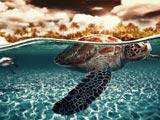 پس زمینه زیبا فرار لاکپشت
