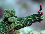 عکس حلزون دریایی سبز رنگ