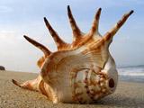 عکس صدف دریایی بزرگ عجیب