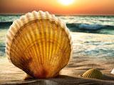 عکس پس زمینه صدف ساحل