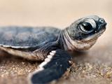 عکس بچه لاکپشت بامزه