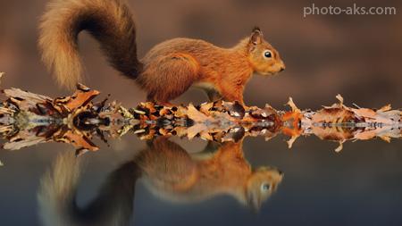 عکس بچه سنجاب ها aks bache sanjab