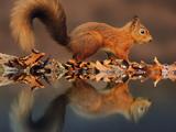عکس بچه سنجاب ها
