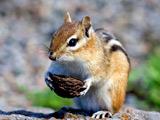 عکس های جدید سنجاب ها