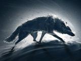 عکس گرگ در کولاک زمستانی
