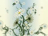 عکس انتزاعی گل های بابونه