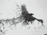 عکس انتزاعی پرواز کلاغ سیاه دودی