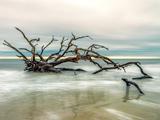 درخت خشکیده در ساحل دریا