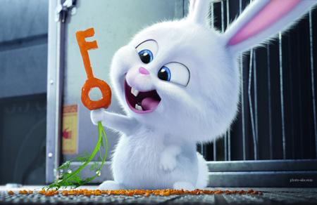 عکس کارتونی خرگوش بامزه سفید rabbit cute white