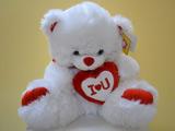 عکس خرس عروسکی تدی