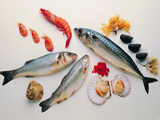 غذای دریایی میگو ماهی صدف