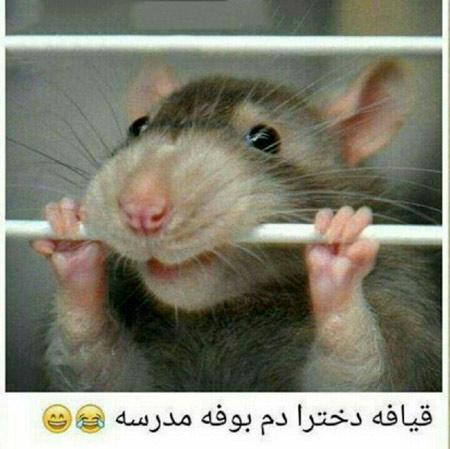 عکس موش بامزه خنده دار aks mosh bamazeh