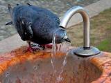 حمام کردن در پارک تهران