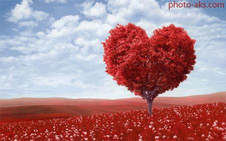 عکس درخت عشق love tree