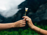 تقدیم گل به دوست