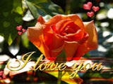 پوستر عاشقانه گل رز صورتی