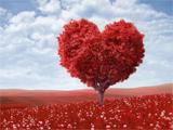 عکس درخت عشق