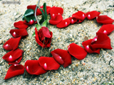عکس عاشقانه قلب از گل رز