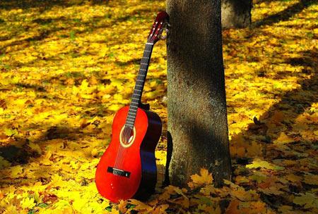 عکس گیتار قرمز در پاییز guitar autumn tree
