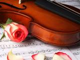 عکس گل رز و ویولن