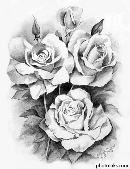 نقاشی سیاه قلم گل رز rose drawing