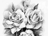 نقاشی سیاه قلم گل رز