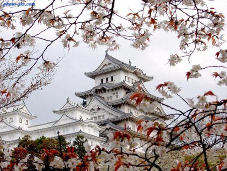 نمای زیبای خانه های اصیل ژاپنی japan house nature