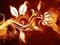 عکس انتزاعی گل در آتش