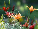 پوستر گلهای زیبای بهاری لیلیوم