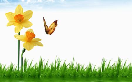 والپیپر بسیار زیبا گل نرکس و پروانه butterfly narcissus flower