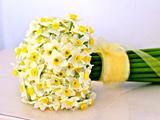 عکس دسته گل نرگس سفید