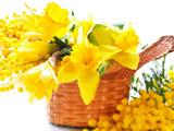 سبد گلهای نرگس زرد