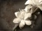 والپیپر گل ارکیده سفید
