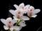 کمیاب ترین عکس گل ها