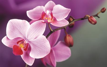 عکس زیباترین گلهای جهان orchid flowers picture