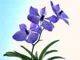 عکس شاخه گل ارکیده آبی