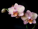 زیباترین عکس گلهای ارکیده