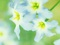 عکس گل آبی روشن