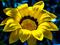 زیباترین عکس گل ها